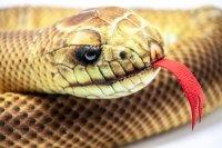 Kuscheltier - Schlange Äskulapnatter - 150 cm lang