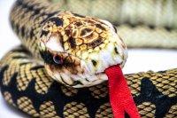 Kuscheltier - Schlange Kreuzotter - 145 cm lang