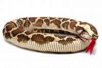Kuscheltier - Schlange Tigerpython - 145 cm lang